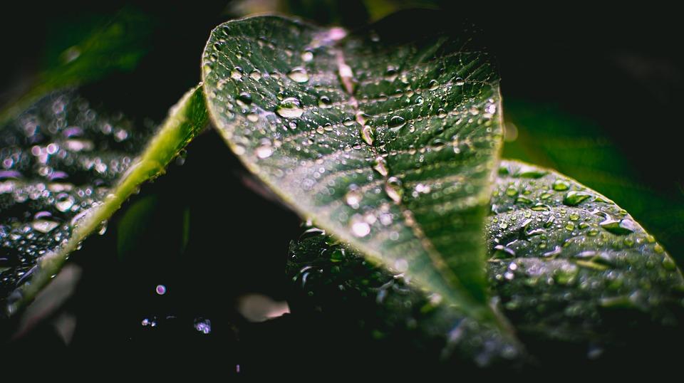 Raindrops, Green Leaf, Rain, Green, Nature, Leaf, Plant