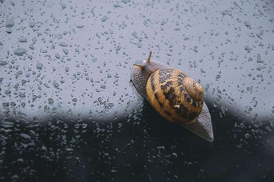 Snail, Spring, Rain