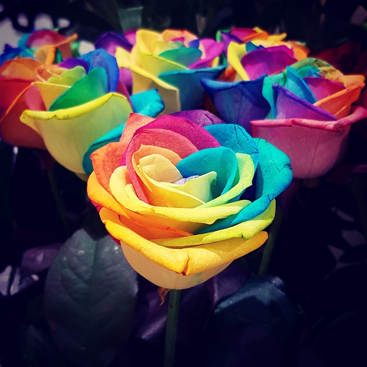 Free photo Rainbow Heaven Colours Flowers Beautiful Roses - Max Pixel