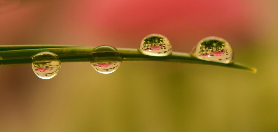Rain, Pearl, Leaf, Nature, Dew, Drip, Raindrop