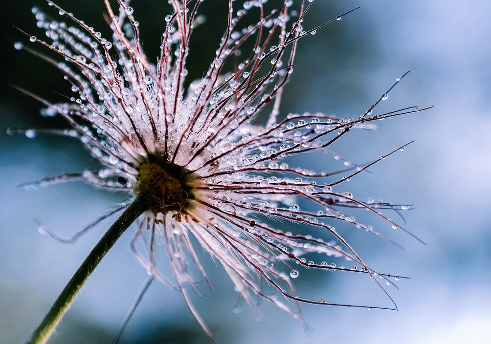 Plant, Drip, Beads, Macro, Raindrop, Flora
