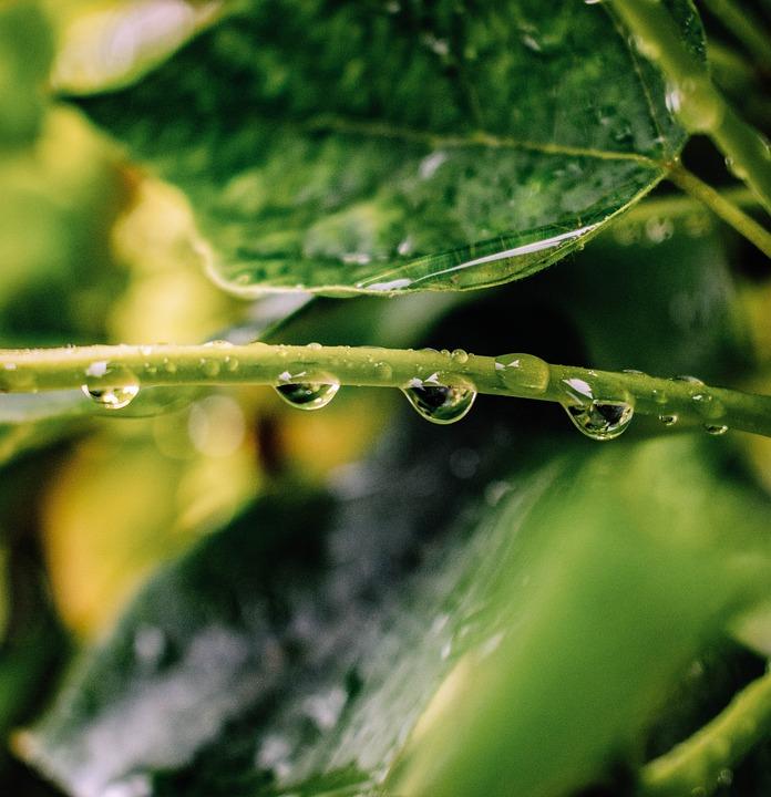Leaves, Drop Of Water, Rain, Leaf, Drip, Raindrop