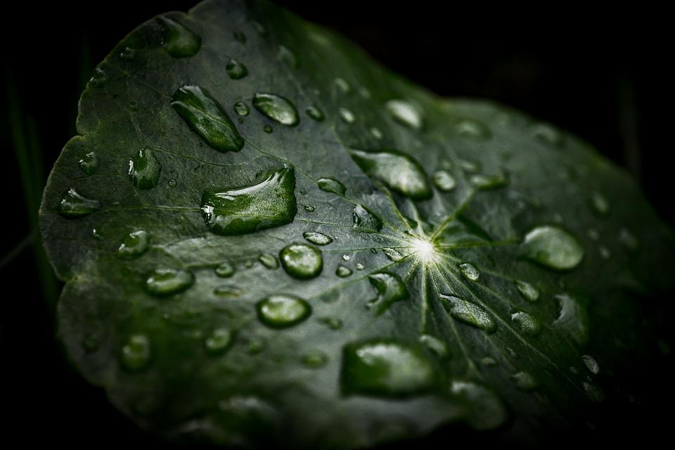 Leaf, Plant, Dew, Wet, Raindrops, Dewdrops, Green