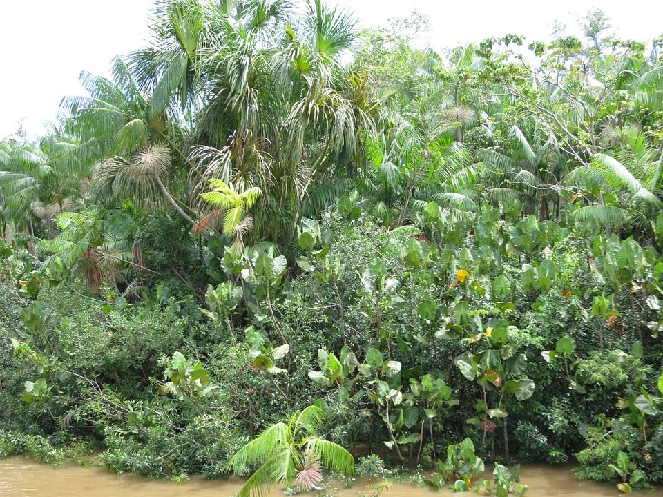 Amazon, Rainforest, Brazil