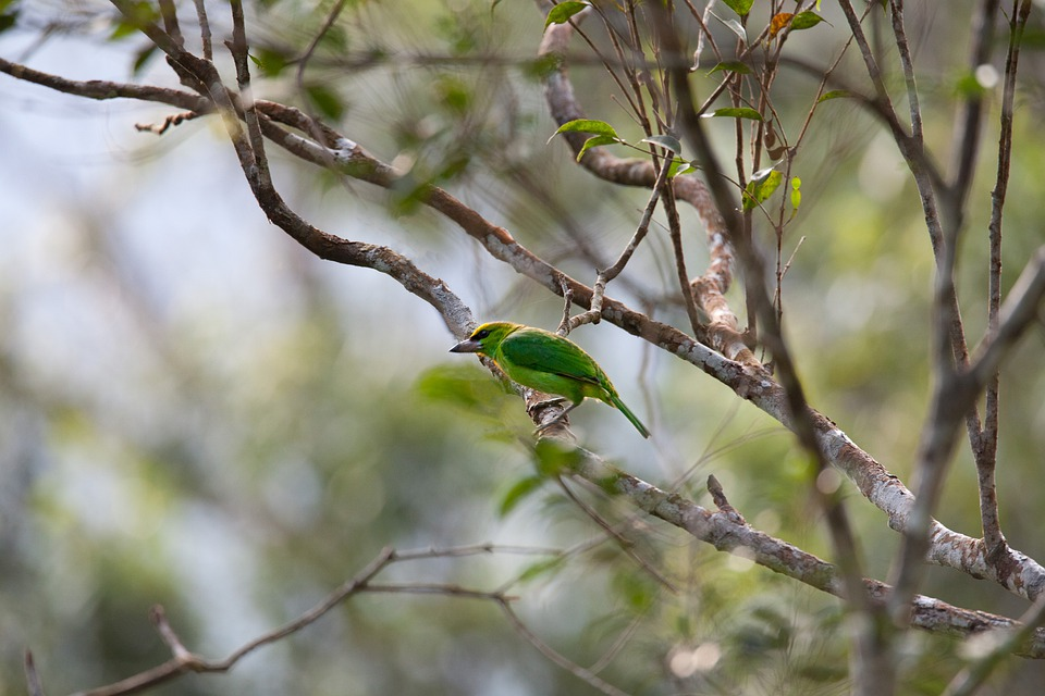Wild Birds, Rainforest, Category Characters List