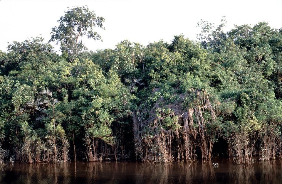 Rainforest, Tropics, Tropical, Nature, Exotic Brazil