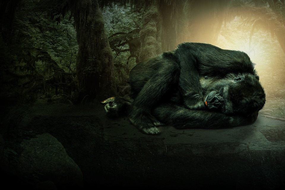 Rainforest, Forest, Trees, Gorilla, Wallpaper