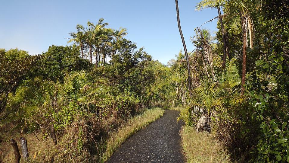 Tropical, Rainforest, Victoria Falls, Zimbabwe, Jungle
