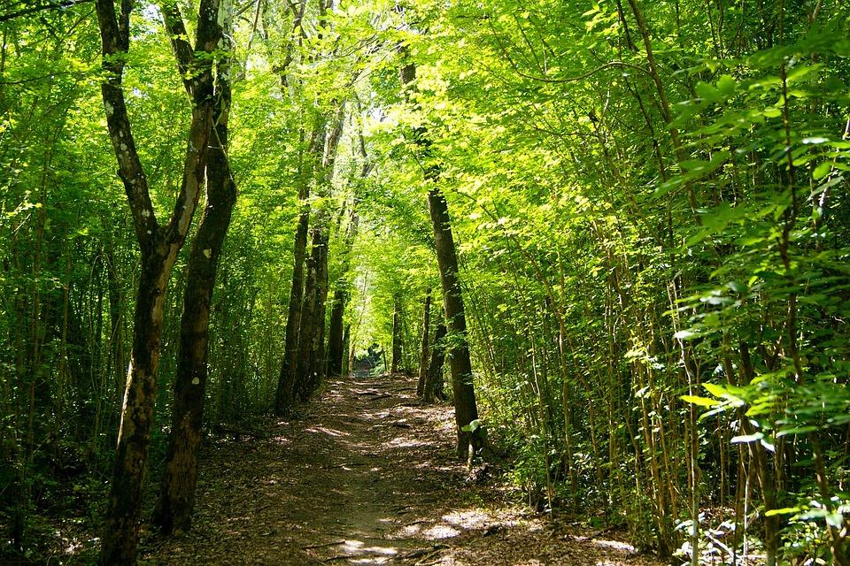 Rainforest, Martinique, Caribbean, Trail