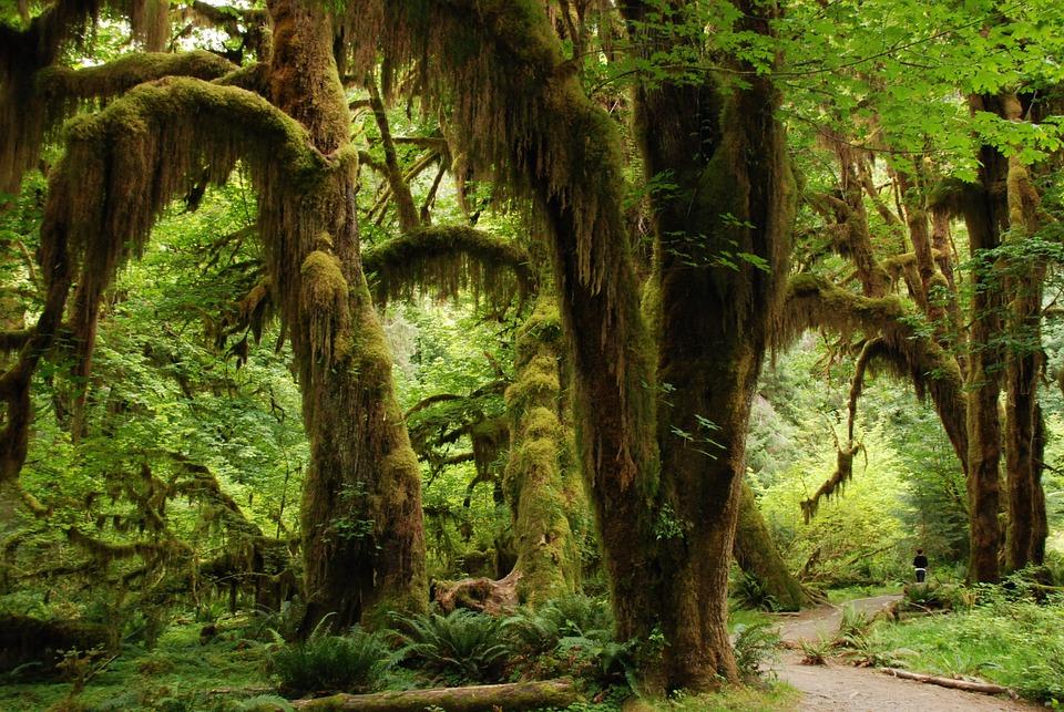Nature, Landscape, Green, Forest, Trees, Rainforest