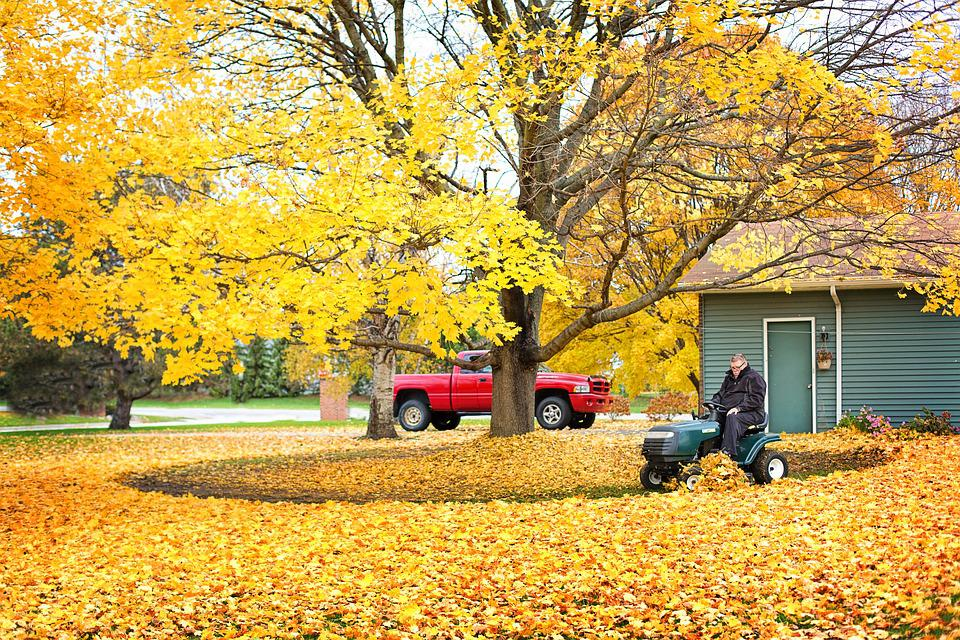 Fall Leaves, Autumn Leaves, Clean Up, Raking