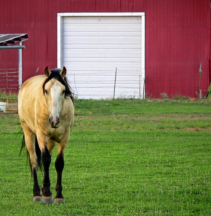 Horse, Barn, Pasture, Farm, Ranch, Animal, Country