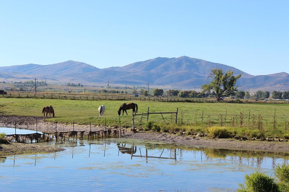 Horse, Ranch, Rural, Farm, Animal, Brown, Mare, Pasture