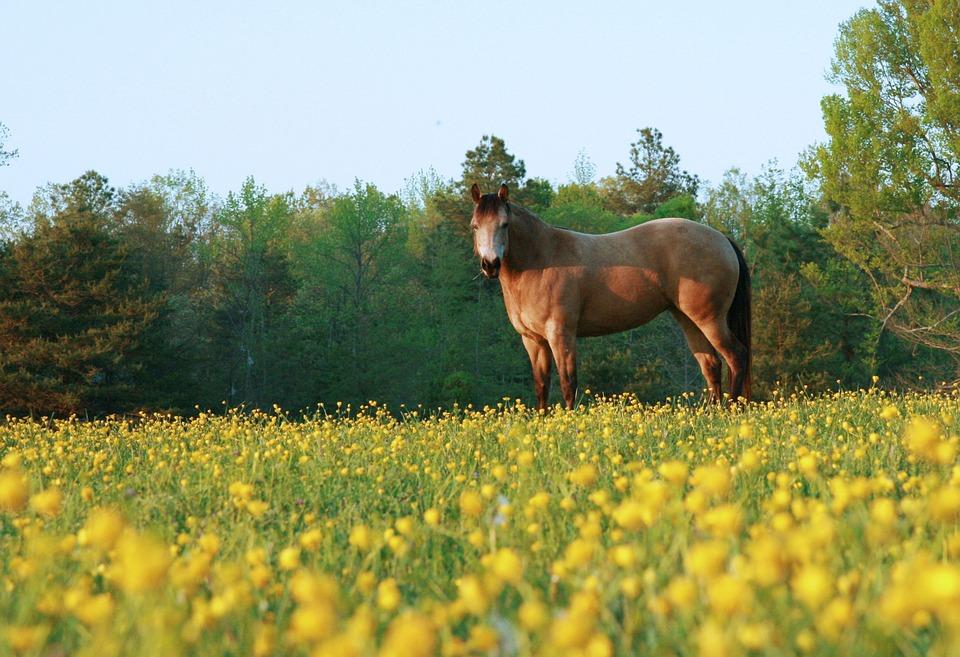 Horse, Countryside, Rural, Farm, Ranch, Outdoors