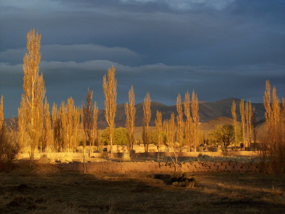 Andean Landscape, Argentina, Tree, Mountain, Range