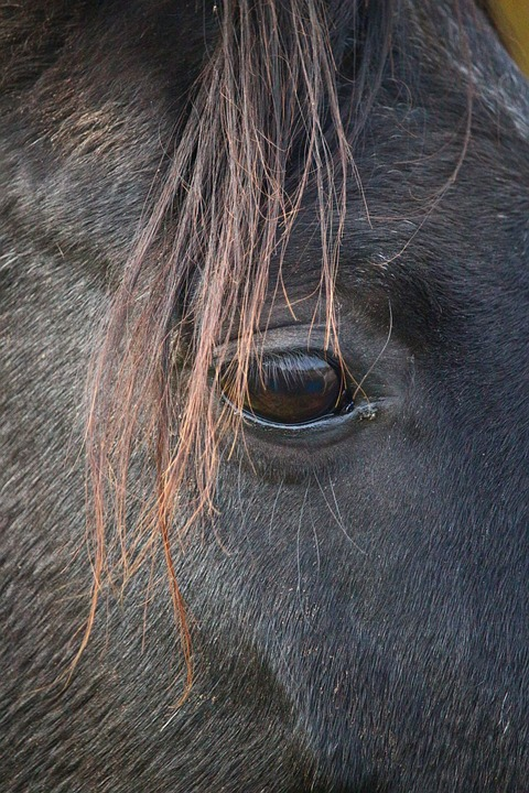 Horse, Rap, Pasture, Autumn, Thoroughbred Arabian, Eye