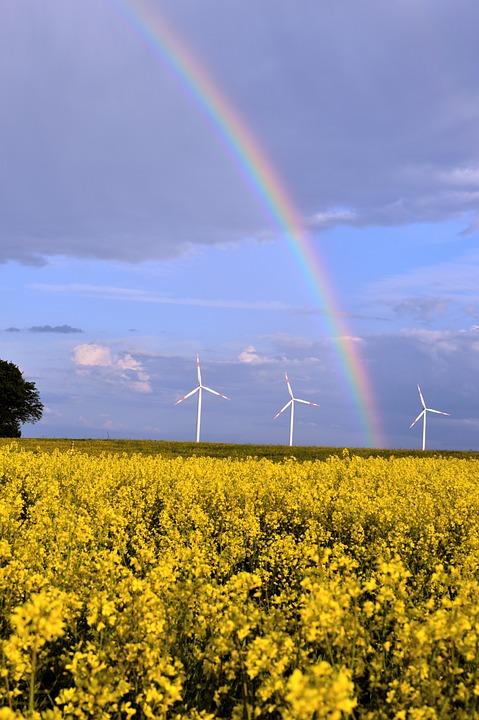Rainbow, Rapeseed, Raps, Wind Turbines