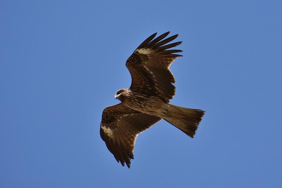 Animal, Sky, Bird, Wild Birds, Raptor, In Africa