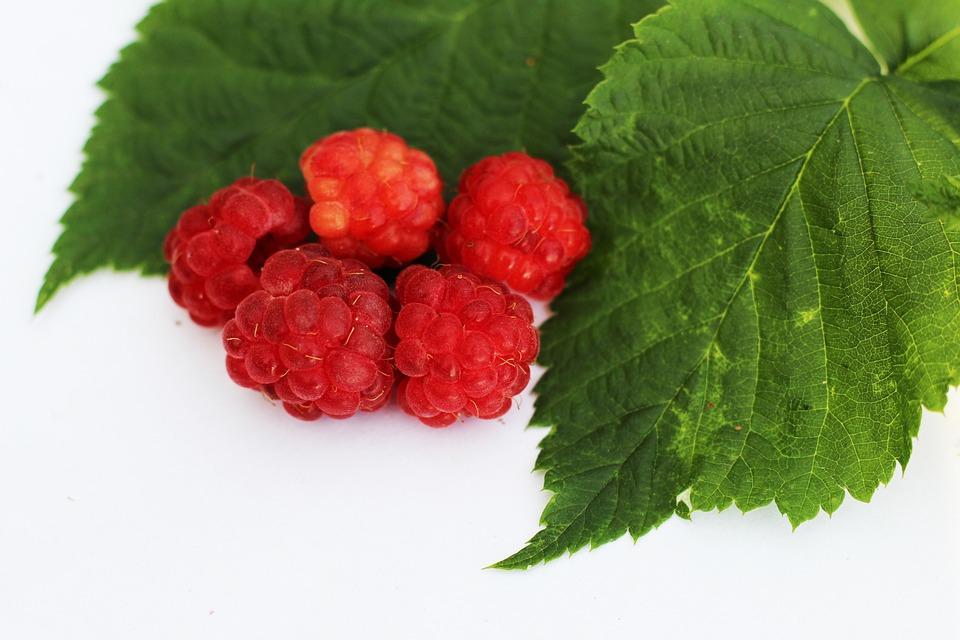 Raspberry, Foliage