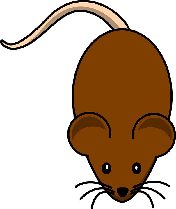 Rat, Rodent, Mouse, Brown, Animal