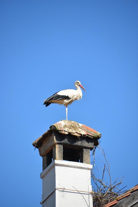 Rattle Stork, Fireplace, Stork, Bird, Animal