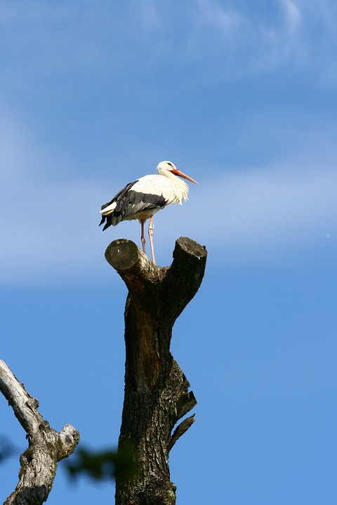 Stork, Tree, Freedom, Overview, Rattle Stork, Sky