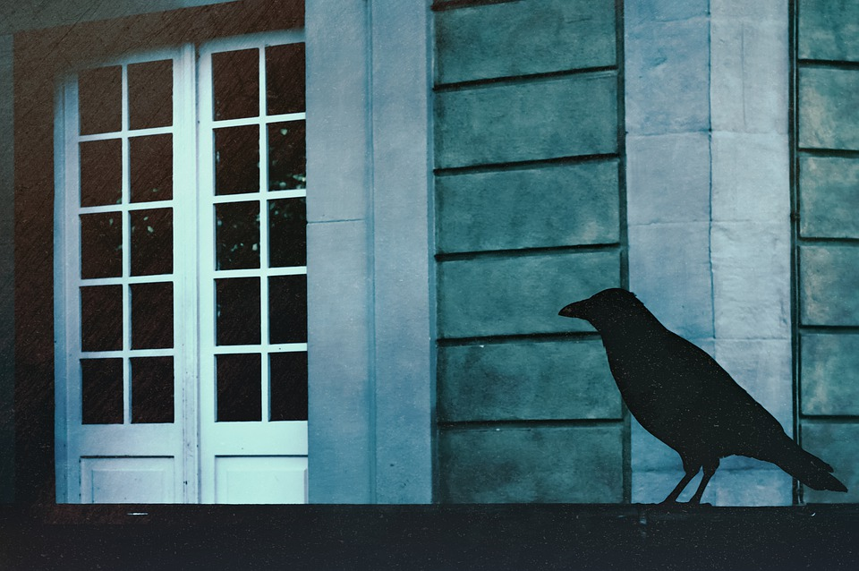 Raven, Bird, Animal, Shadows, Darkness, Rail, Building