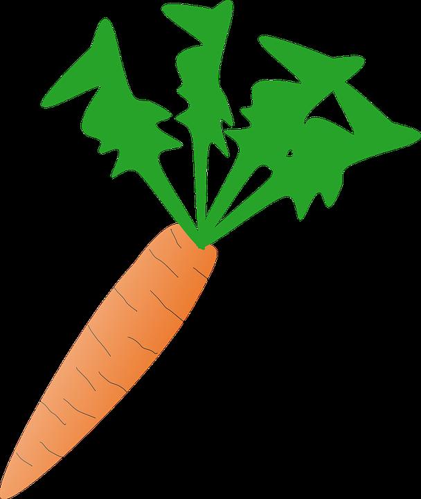Carrot, Vegetable, Fresh, Healthy, Organic, Raw