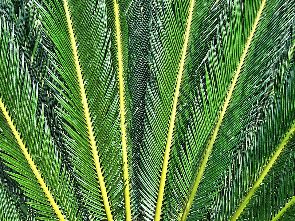 Fern, Texture, Rays, Green, Leaves, Needles, Thailand