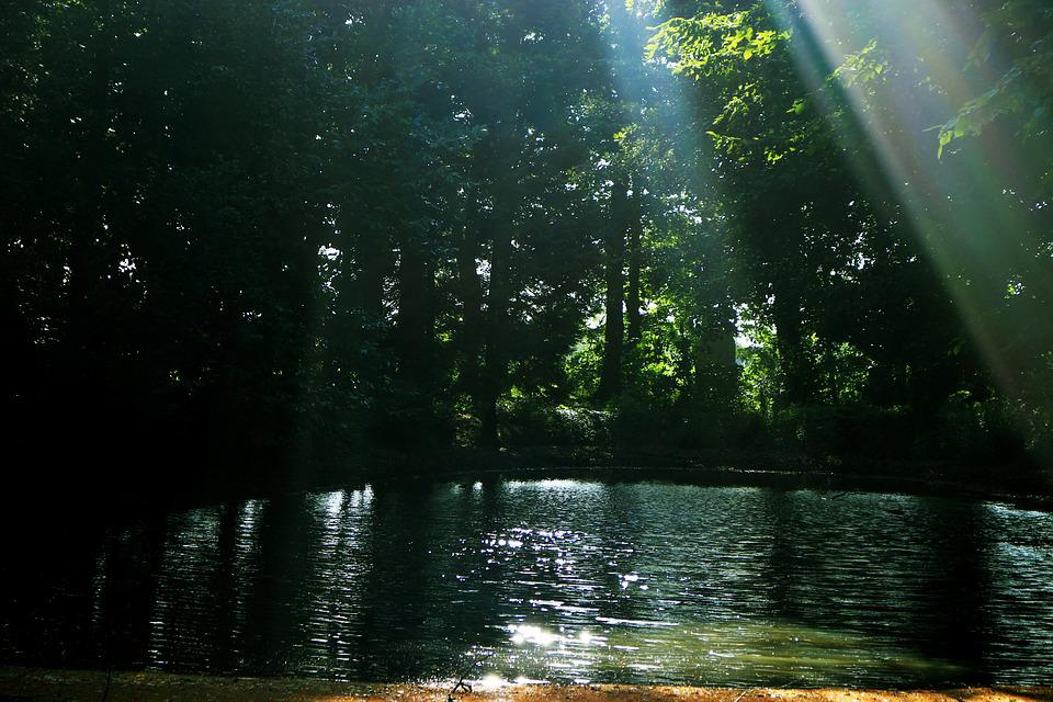 Forest, Water, Rays, Nature, Landscape, Lake