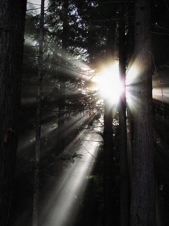 Rays Of Light, Rays, Light Rays, Light, Nature, Sky