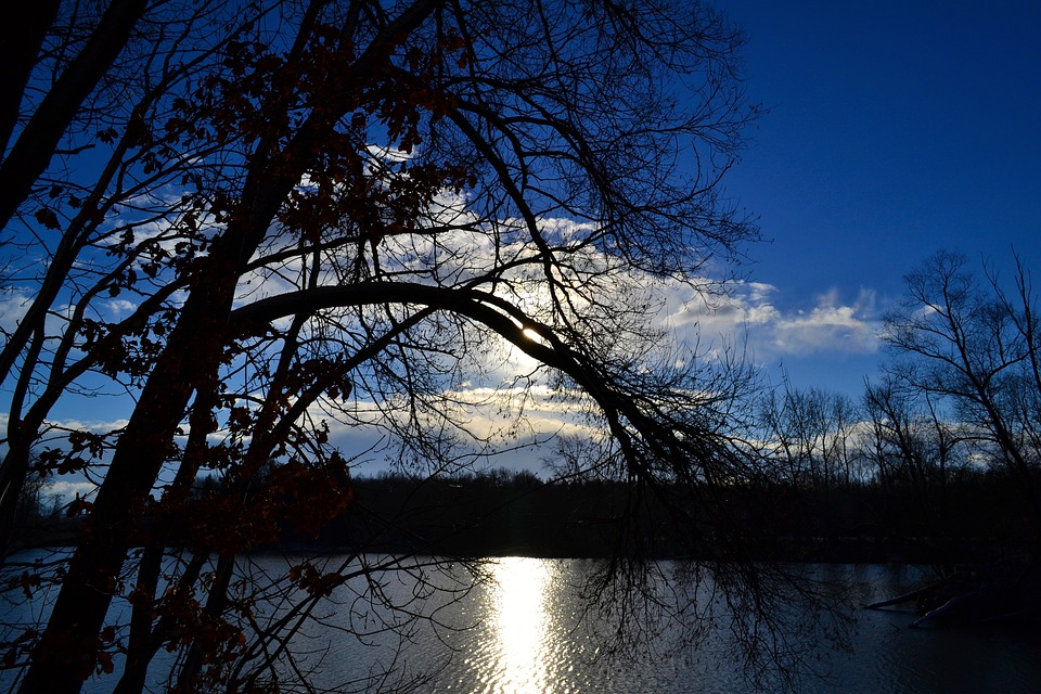 Tree, Lake, Mirroring, Sky, Blue, Sun, Rays, Light