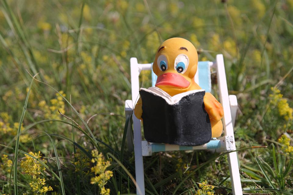Read, Duck, Chair, Book, Meadow, Flowers, Green