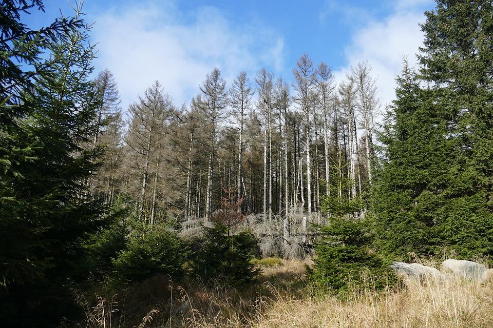 Waldsterben, Reafforestation, Contrasts, Live, Death