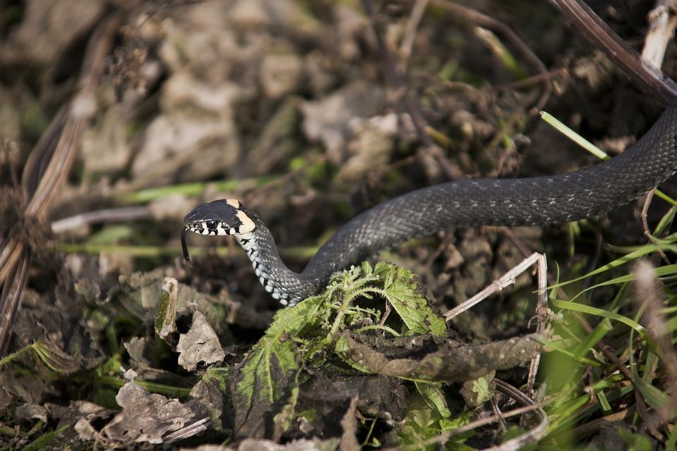Snake, Really, Creep, Scales, Danger