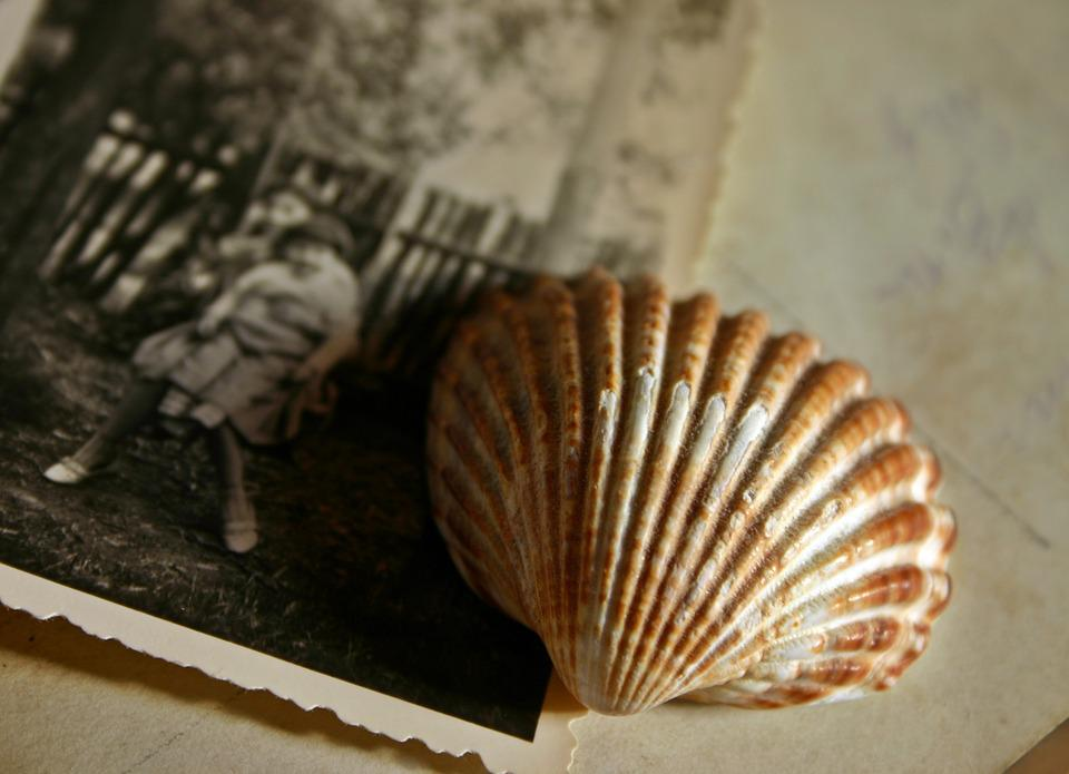 Memory, Photo, Image, Recording, Shell, Souvenir, Past