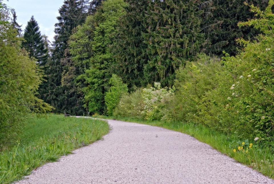 Spring, Leisure, Recovery, Hiking, Lane, Road, Away