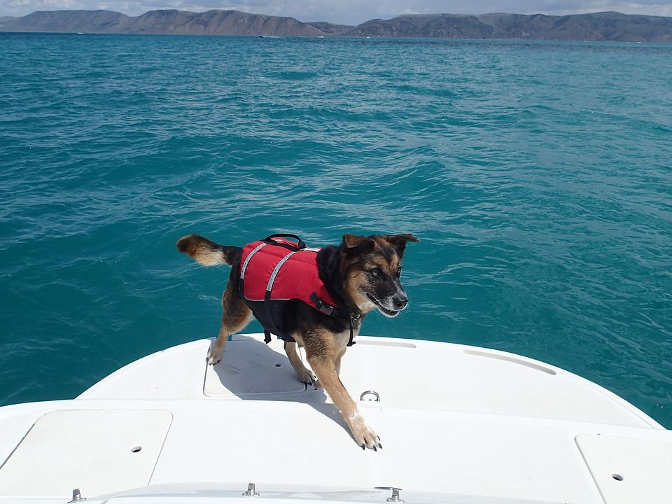 Dog, Lake, Water, Leisure, Summer, Outdoor, Recreation