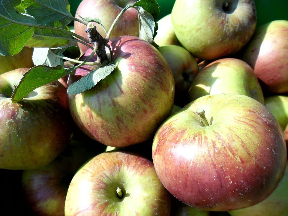 Apples, Apple, Fall, Garden, Nature, Fruit, Red Apple