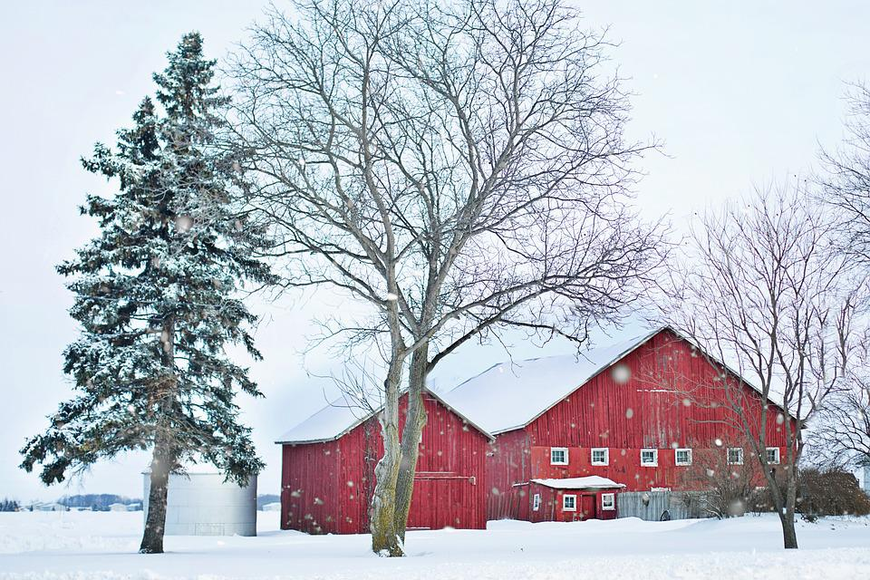 Barn, Red, Winter, Snow, Pines, Rural, Farm, Country