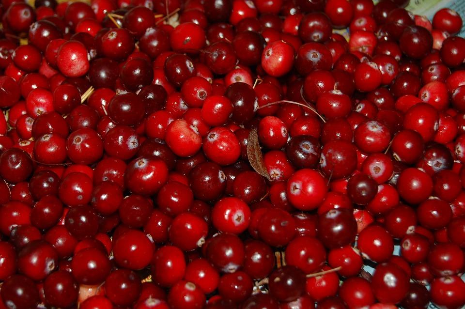 Cranberries, Berry, Red, Fruit, Autumn, Swamp