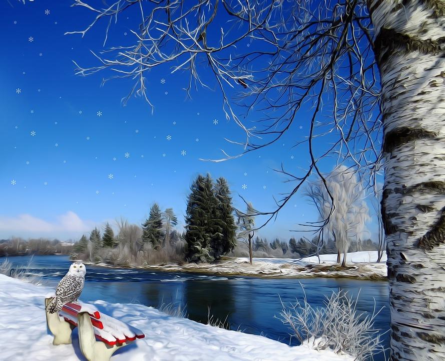 Winter, Snow, Owl, Birch, Tree, Bank, River, Red, White