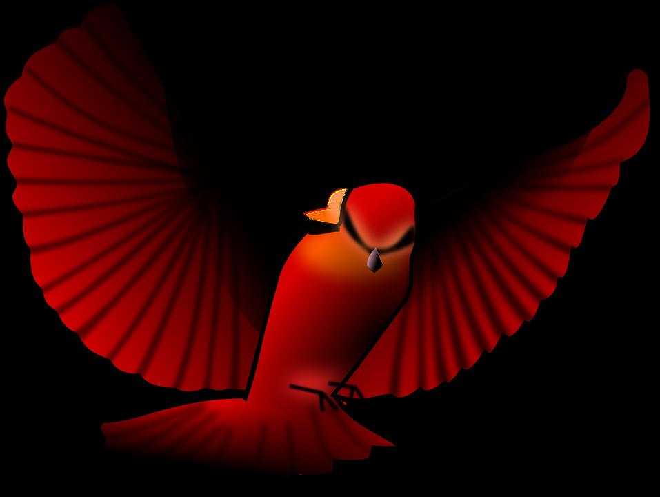 Bird, Red, Wings