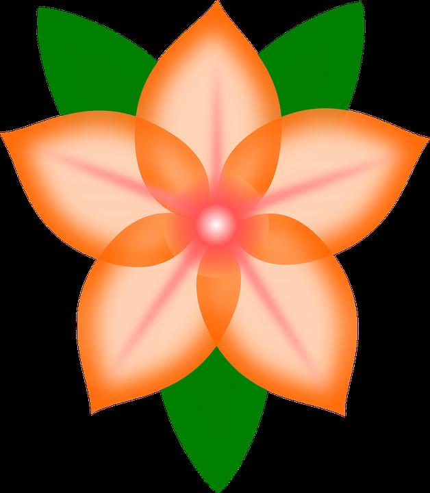 Flower, Red, Plant, Bloom