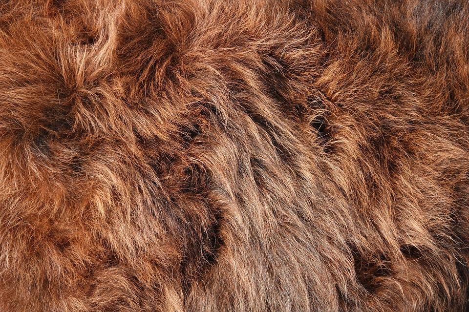 Kuhfell, Red Brown, Curly, Fur, Livestock, Animal, Farm