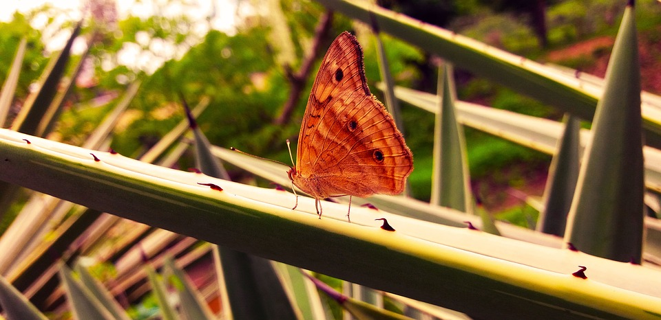 Butterfly, Red, Insects, Bugs, Photography, Animal