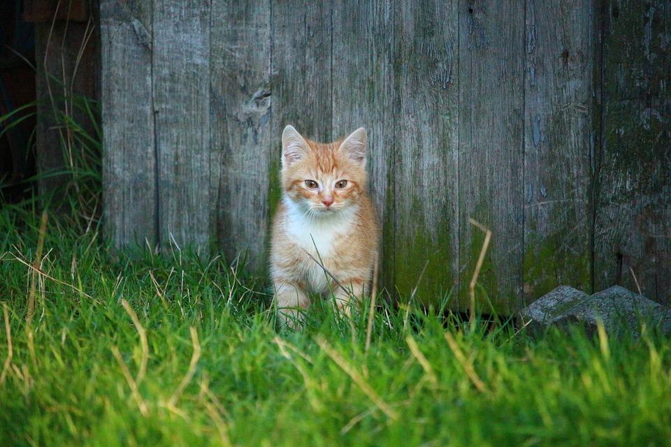 Cat, Kitten, Cat Baby, Young Cat, Red Cat