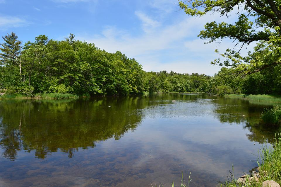 Red Cedar River, Stream, Pine Trees