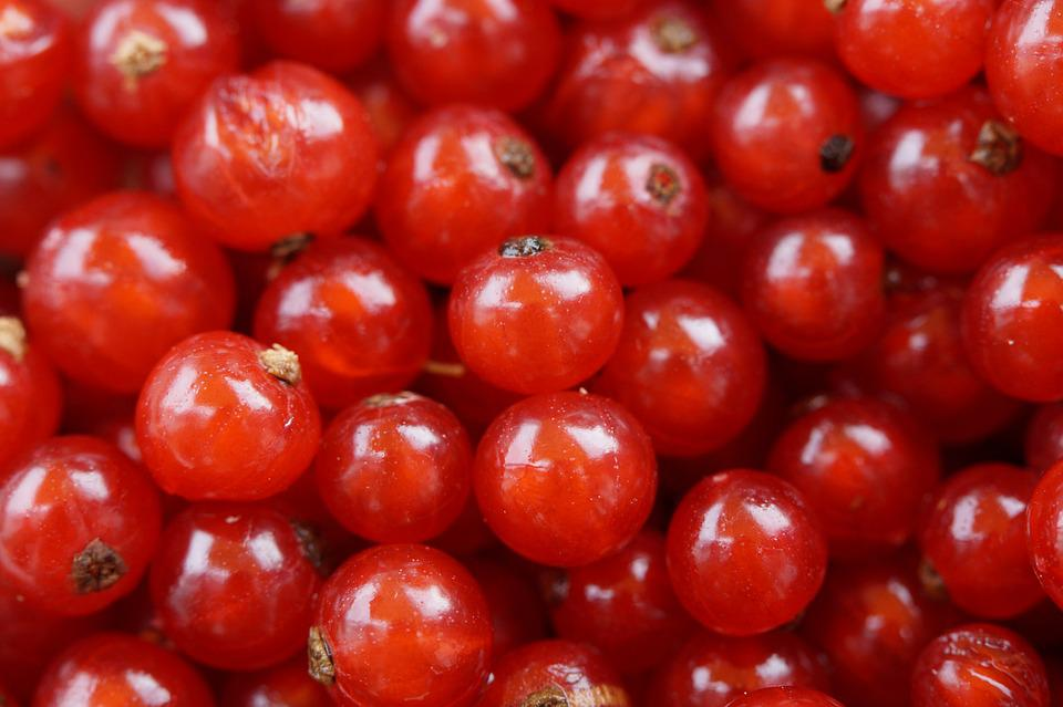 Currants, Berries, Fruit, Red, Red Currant, Soft Fruit