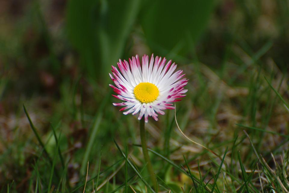 Daisy, Garden, Yellow, Red, Pink, Spring, Flowers